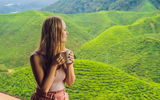 Hujšanje z zelenim čajem